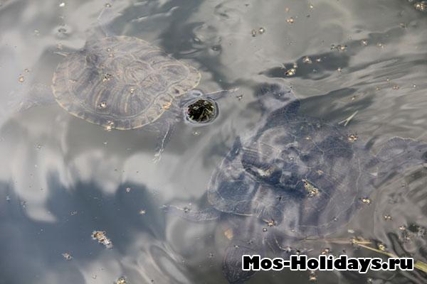 Черепахи в Ботаническом саду МГУ на Проспекте Мира