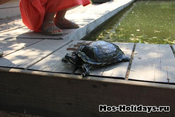Черепаху вытащили из её пруда. Аптекарский огород МГУ на Проспекте Мира