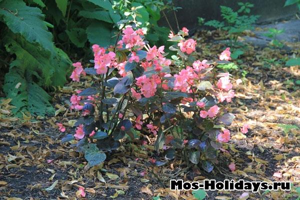 Цветы из парка Аптекарский огород на Проспекте Мира