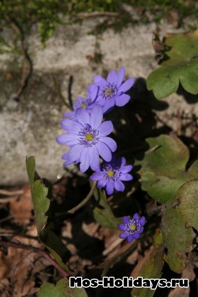 Цветы в ботаническом саду РАН