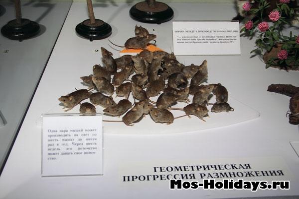 Геометрическая прогрессия размножения мышей