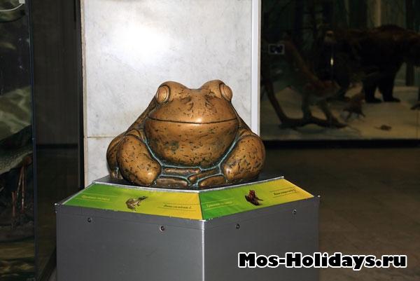 Лягушка на третьем этаже музея Дарвина