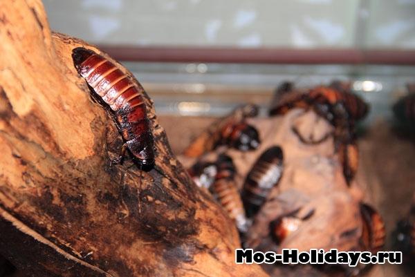Тараканы в выставочном комплексе музея Дарвина