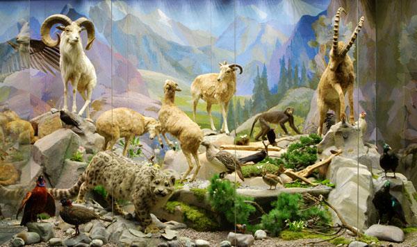 Жители гор в Дарвиновском музее
