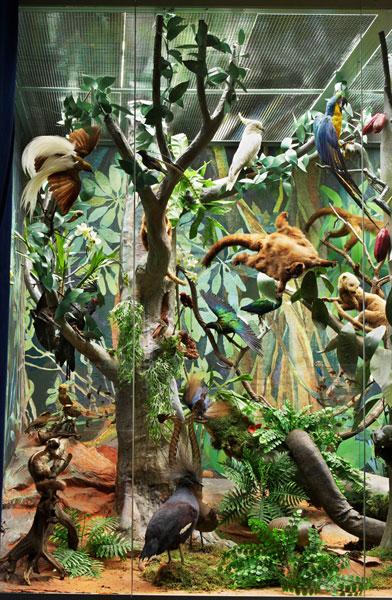 Жители тропиков в Дарвиновском музее