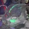 ice-gallery41