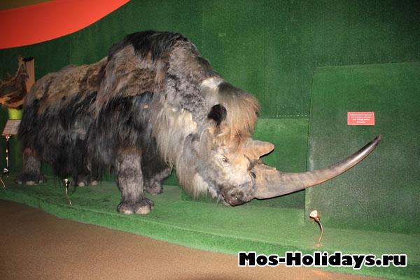 """Шерстистый носорок в музее """"Ледниковый период"""""""
