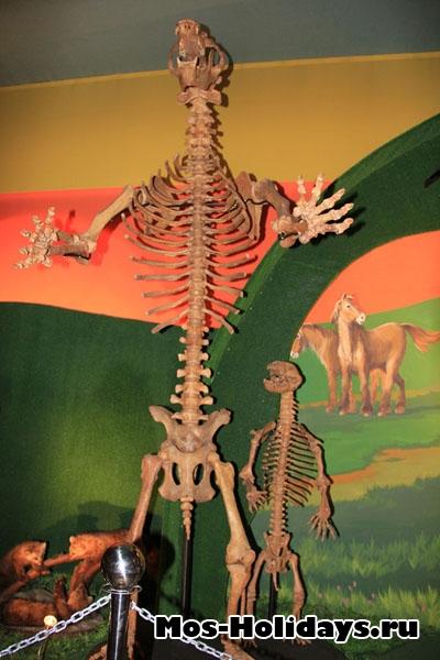 """Скелет пещерного медведя в музее """"Ледниковый период"""""""