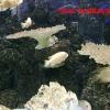 Красивая белая рыбка