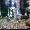 Скелет и пираньи