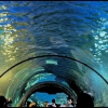 Океанариум в ТРЦ РИО