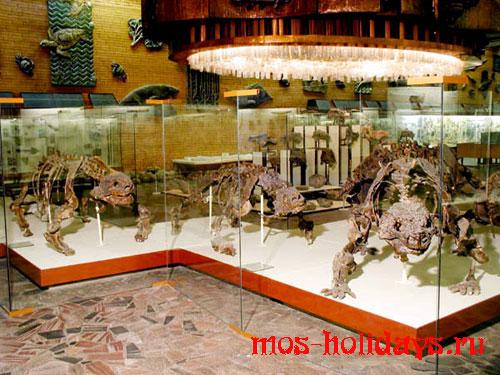 Скелеты парейзавров из Палеонтологического музея