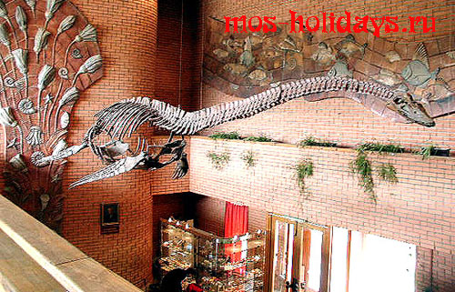 Скелет плезиазавра в Палеонтологическом музее
