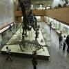 Диплодок в Палеонтологическом музее