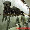 В Палеонтологическом музее