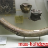Бивень мамонта в Палеонтологическом музее
