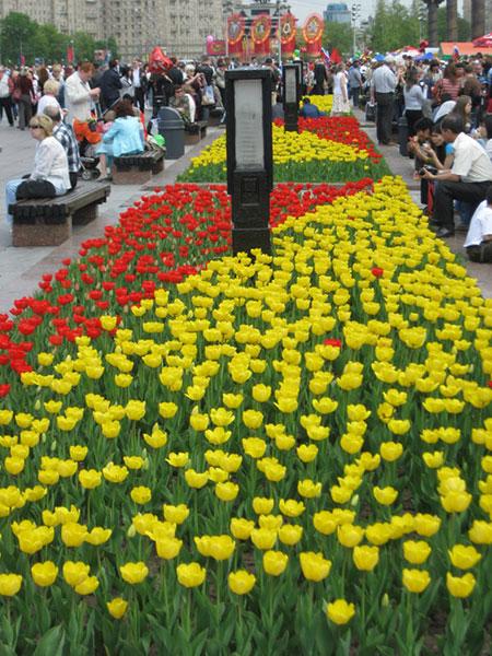 Тюльпаны весной в Парке Победы в Москве