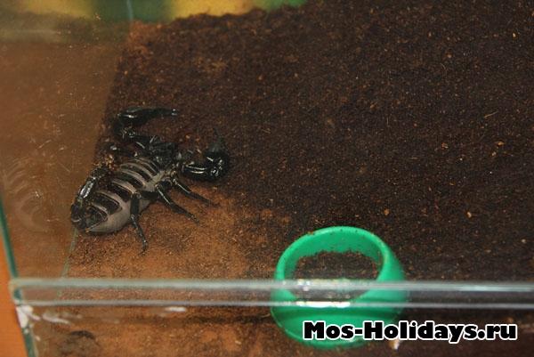 Скорпион на выставке бабочек на ВВЦ