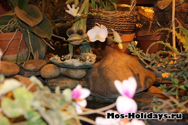 Лягушка на выставке бабочек на ВВЦ