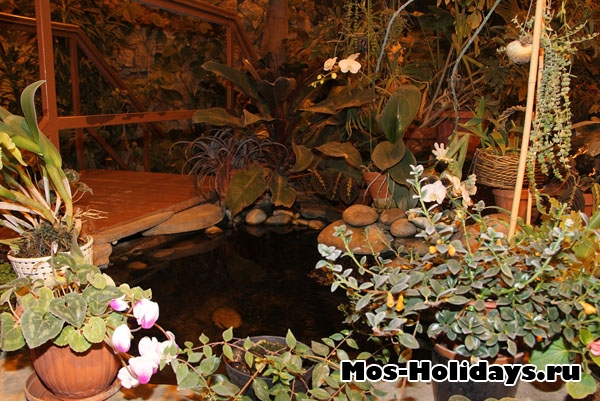 На выставке тропических бабочек на ВВЦ