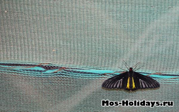 Бабочка с выставки на ВВЦ