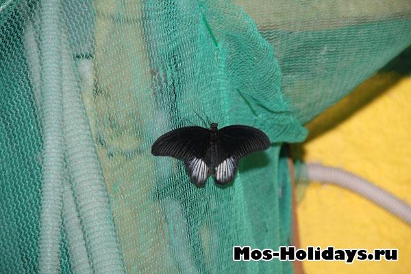Бабочка на выставке на ввц