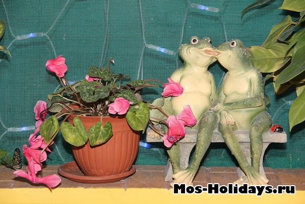 Лягушки на выставке тропических бабочек на ВВЦ