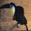 Выставка экзотических птиц на ВВЦ