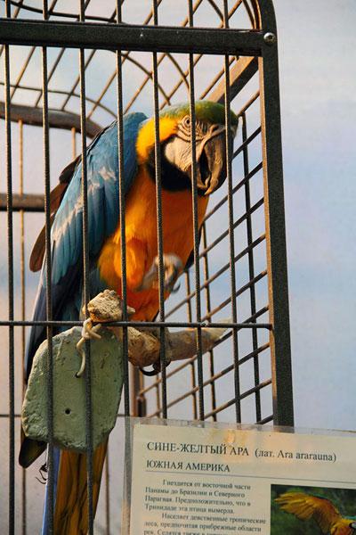 Попугай ара на выствке экзотических птиц на ВВЦ