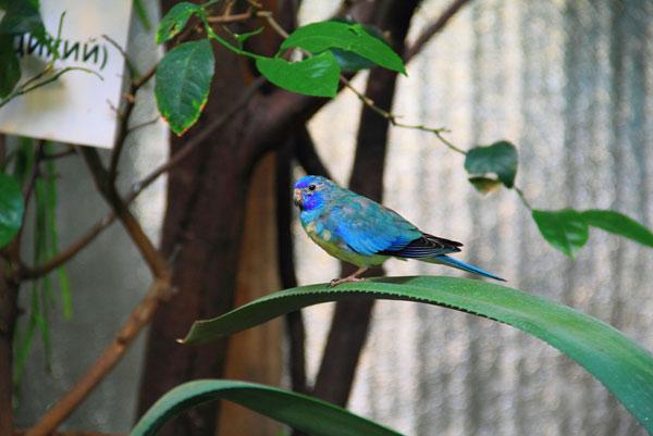 Фотография с выставки экзотических птиц на ВВЦ