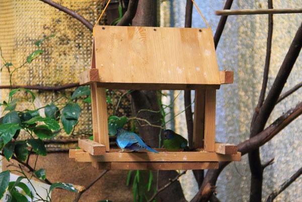 Скворечник с едой для птиц на выствке экзотических птиц на ВДНХ