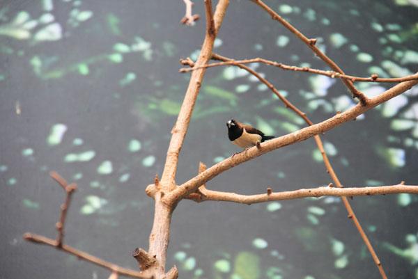 Фото с выставки экзотических птиц на ВВЦ