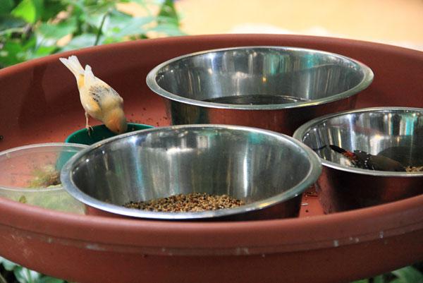 Фото с выставки экзотических птиц на ВДНХ