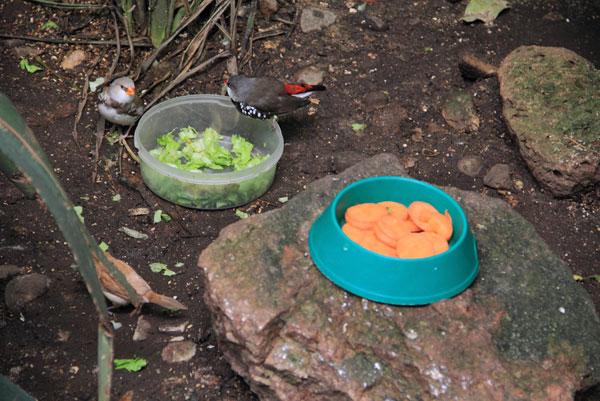 Фотографии с выставки экзотических птиц на ВДНХ