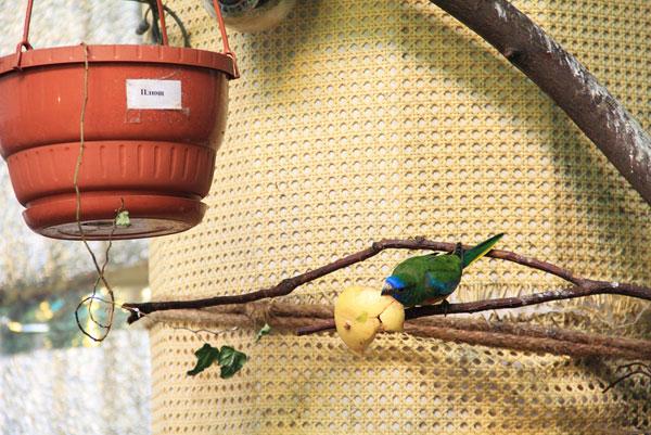 Фото с выставке экзотических птиц на ВДНХ