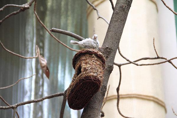 Фотография с выставки экзотических птиц на ВДНХ
