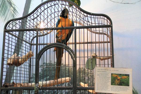 Попугай ара с выставки экзотических птиц на ВВЦ