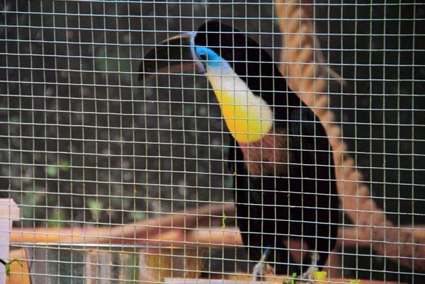 Тукан с выставки экзотических птиц на ВВЦ