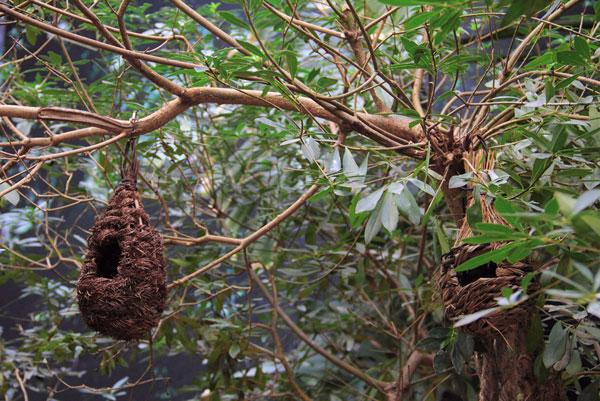 Птичьи гнезда на выставке экзотических птиц на ВВЦ