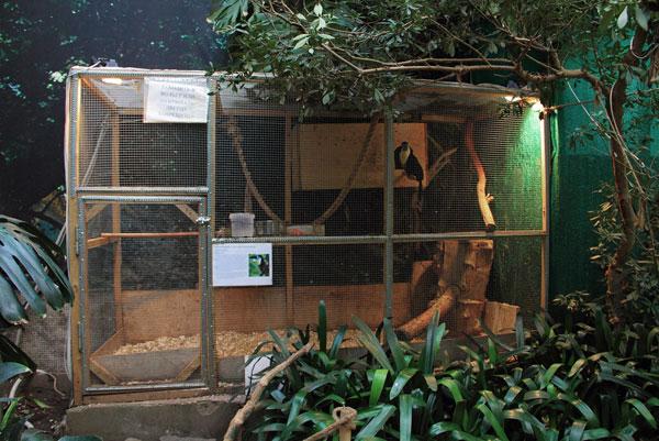 Вольер с туканами на выставке экзотических птиц на ВВЦ