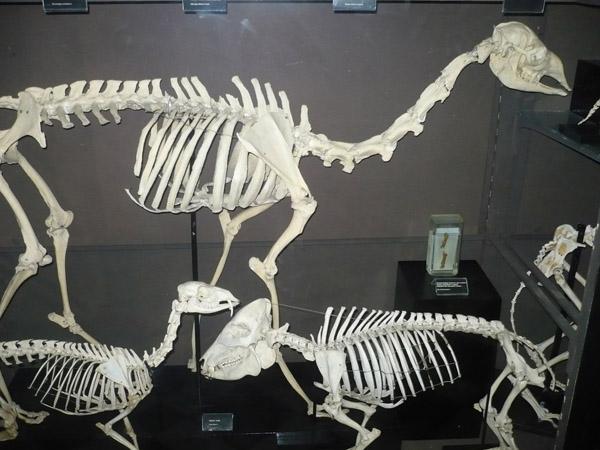 В Костном зале Зоологического музея МГУ