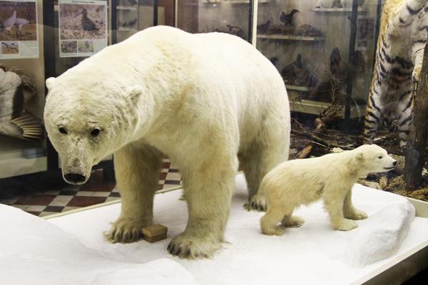 В Зоологическом музее МГУ