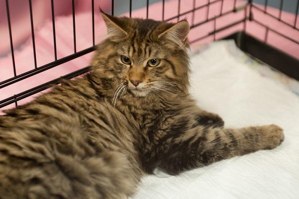 Выставка кошек «Кэт-Салон-Январь»