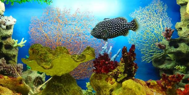 Посещение Океанариума «Тайны Океана» и Тропического сада экзотических птиц и бабочек