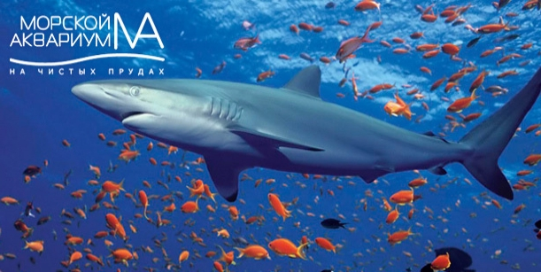 Интересная экскурсия в океанариум «Морской аквариум на Чистых прудах»