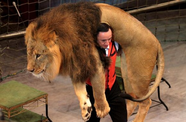 Цирк огромных зверей в Сокольниках