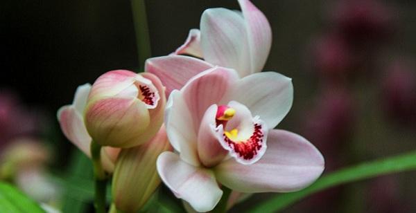 Выставка «Цветущая Азия» в Ботаническом саду