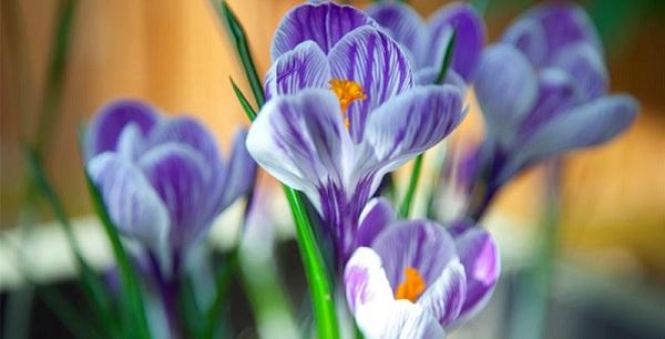 Выставка «Цветов весны причудливые краски» в Царицыно