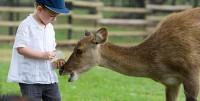 Посещение контактного зоопарка «Горки» для взрослых и детей