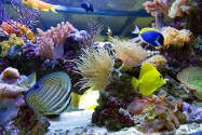Экскурсия «Океанариум – чудесный Коралловый Сад» в Морском аквариуме «Океанариум»